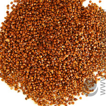 Cardamon, Grains-of-Paradise seed