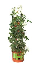 HydroFarm Tomato Barrel