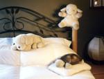 Sleep Sheep and Friends