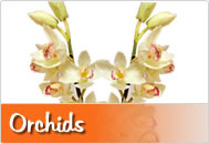 Real Touch Artificial Orchids