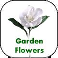 garden-flowers.png