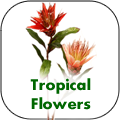 tropical.flowers.png