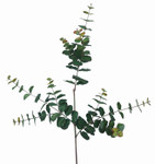 Eucalyptus Spray, with 3 Branches