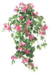 Hanging Bouganvillea Bush, with 199 Leaves