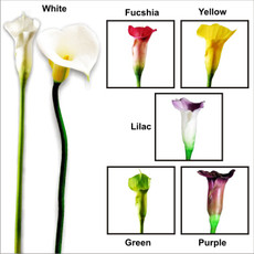 Real Touch Artificial Floramatique Large Calla Lily