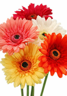 Real Touch Artificial Gerbera Daisy Realistic Fake Daisies