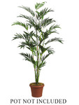 6-Foot Bamboo Palm, with 447 Leaves - Not Potted