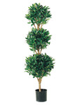 4-Foot Triple-Ball Sweet Bay Topiary - Potted in PVC Container