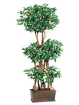 4-Foot Ficus Wall Trees in Wood Container