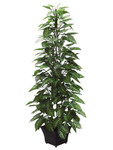 4-Foot Nephthytis Plant on Pole in Metal Pot
