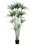 5-Foot Papyrus Plant, with 12 Branches