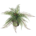 Boston Fern Bush with 20 Branches