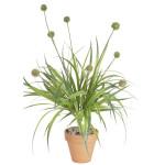 Wild Grass with Pods Bush x 9