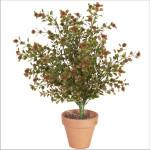 Yaupon Button Leaf Bush x 9