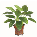 Emerald Philo Plant - Green
