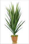 Spiky Yucca Head with 37 Leaves