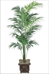 8-Foot Areca Palm w/472 Leaves
