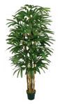 7-Foot Raphis Palm x 5 Branches w/443 Leaves in Pot