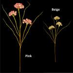 Pom Pom Bloom