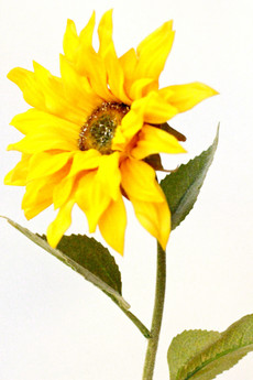 Amazing natural touch Sunflower to brighten your day!