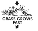 Grass grows faster