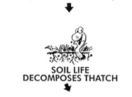 Soil life decomposes thatch