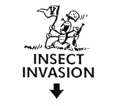 Insect Invasion