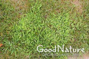 clp-crabgrass-md.jpg