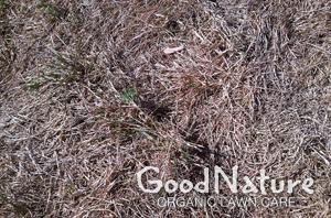 clp-domant-grasses-md.jpg