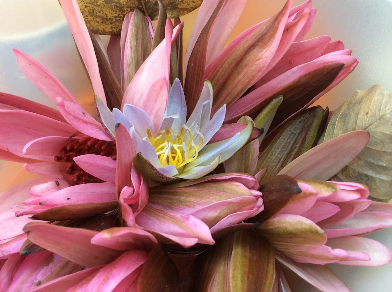 India Findhorn Flower Essences