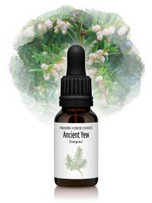 Ancient Yew Flower Essence