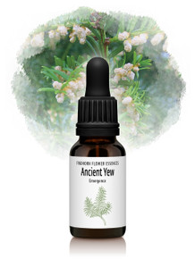 Ancient Yew Flower Essence 15ml drops