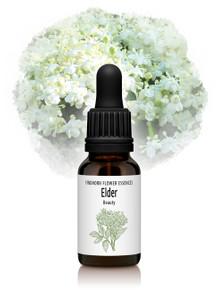 Elder Flower Essence 15ml drops