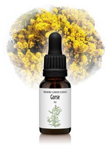 Gorse Flower Essence 15ml drops