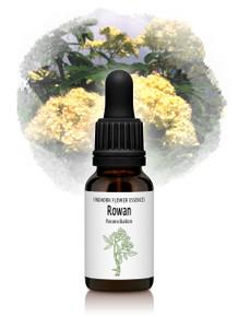 Rowan Flower Essence