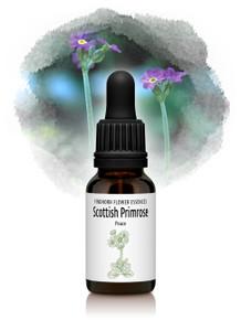 Scottish Primrose Flower Essence 15ml drops