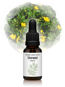 Silverweed Flower Essence