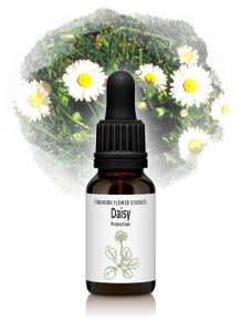 Daisy Flower Essence 15ml drops