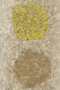 mustard-coffee-smartstrand-small.jpg