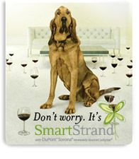 smart-strand-dog.jpg