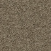 Gentle Essence Smartstrand Silk Carpet - Color: Herb Garden by Mohawk Flooring