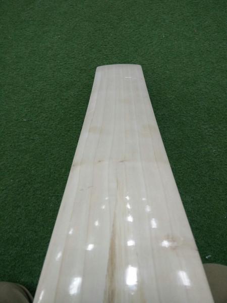 BAS Dolphin Cricket Virat Profile