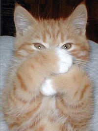 cat-covering-his-face.jpg