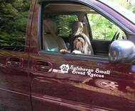 A Designer Dog, A Mountain Design, and Designing for Change