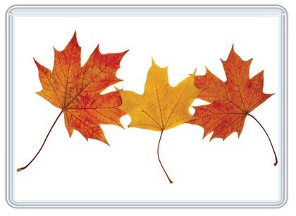 Frame Fall Leaves