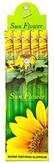 Flute Sunflower 6Pk