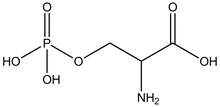 O-Phospho-DL-serine