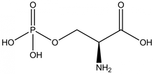 O-Phospho-L-serine