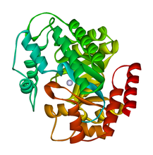 Adenosine Deaminase