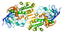 Alcohol Dehydrogenase - image by wiki user Emw
